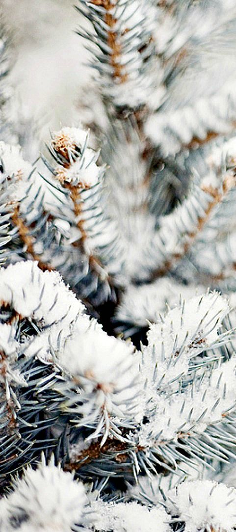 a white christmas...