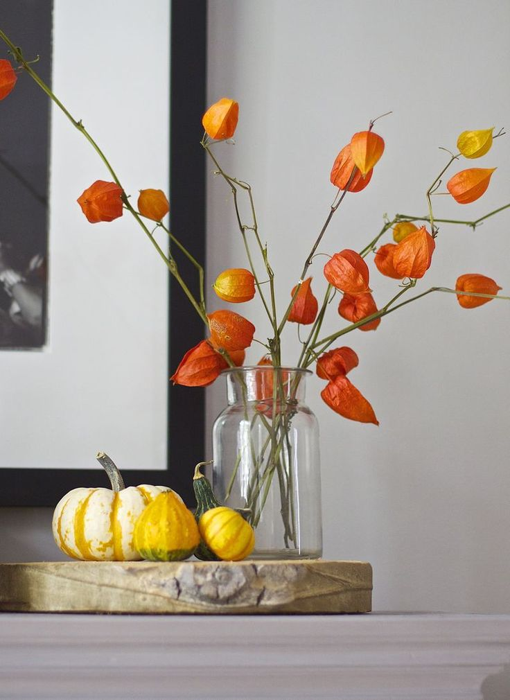 Nature by Mail Order: Fall Finds