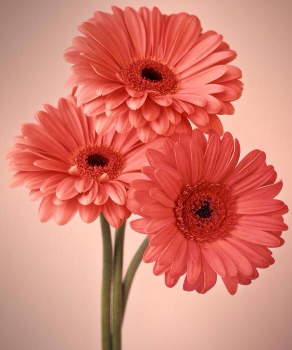 flower photography orange gerbera daisy floral wall art orange