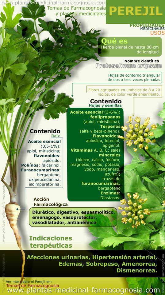Beneficios del perejil. propiedades. #vidasana #comerbien #saludable #perejil #alimentos