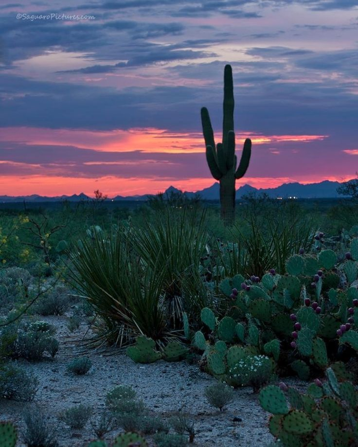 1000 images about it 39 s a Tucson thing on Pinterest Tucson Watershed M