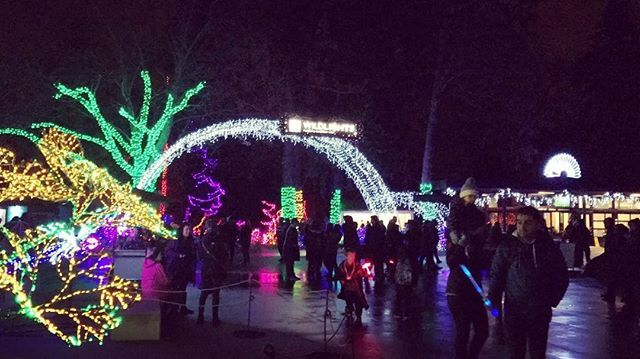 Thank you all for following along today. It was fun to show you the ins and outs of WildLights! Tonight was the first night of the event, so I hope to see you soon! Get your sparkle on by visiting www.zoo.org/wildlights for all the info. If you see me or any of the WildLights crew, please say hello! We always love to hear what you think of our latest light displays! #woodlandparkzoo #glow #zoolife #holidaylights #wpzwildlights #getyourglowon #luminate #animallovers #seattle #familyfun #lit…