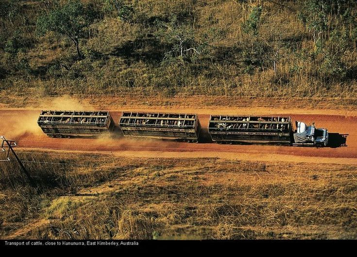 australian vehicles   STRANGE SEMI TRUCK CATTLE TRAIN - KIMBERLEY AUSTRALIA