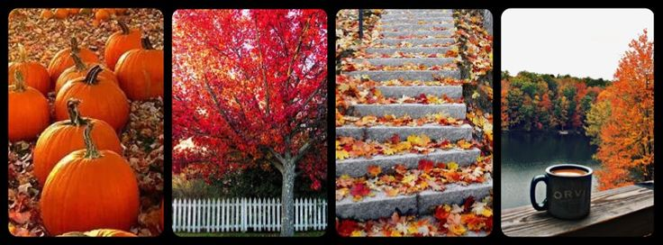 Fall Facebook cover photo- autumn leaves - pumpkins - fall trees