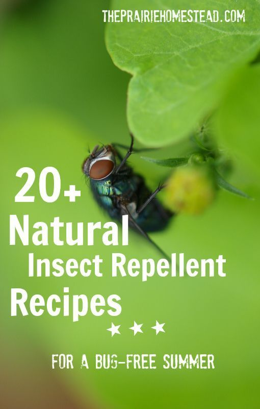 20 homemade insect repellent recipes gardens bug spray - Natural insect repellent for gardens ...