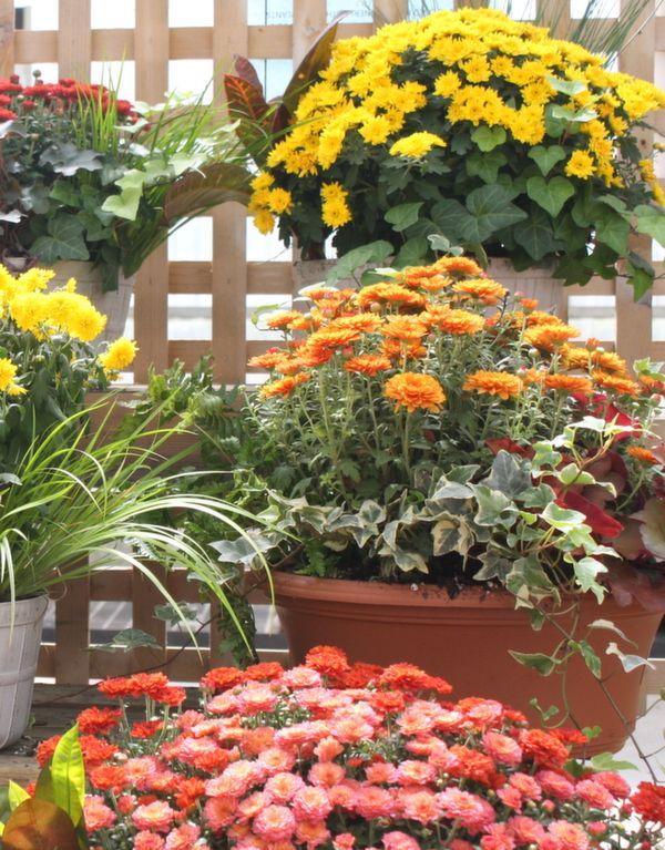 gardens ideas autumn gardeningtips fall planters gardening
