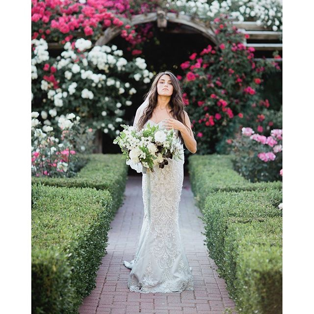 Anyone know where 'Khaleesi' dress got her name? Hint: I'm really missing it this beautiful Sunday...P.S. Thanksgiving Point Rose Garden is magical. Check out @jasmine_bridal Style T162061 in store or online via #linkinbio! PC: @alixann_loosle_photography