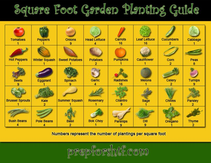 Square Foot Garden Planting Guide - Preparing For SHTF