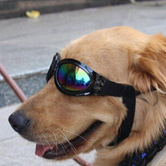 Compra Plegable Animales domésticos Gafas de sol Perro Goggles Proteccion lentes Gato anteojos (Negro) online ✓ Encuentra los mejores productos Cuidado de la vista para perros GENERIC en Linio Chile ✓