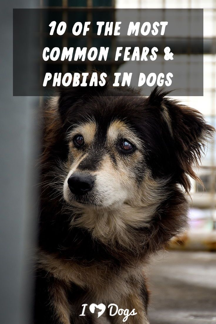 10 Of The Most Common Fears And Phobias In Dogs Easiest Dogs To