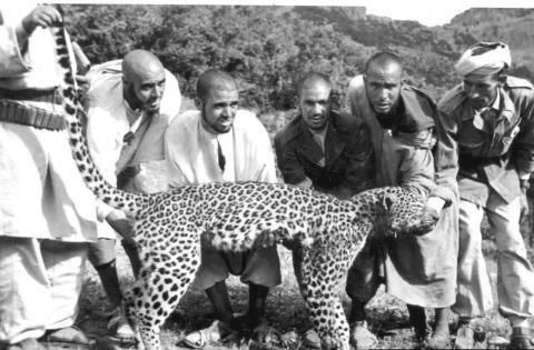 A une certaine époque, des panthères et lions vivaient dans la région de l'Atlas marocains. Durant les années 60 et à force d'être chassés, ces espèces