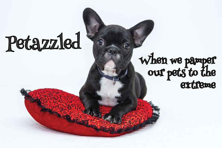 Petazzled! All about when we pamper our pets to the extreme. #pets #accessorize #pamper https://petztrax.wordpress.com/2015/07/20/petazzled/