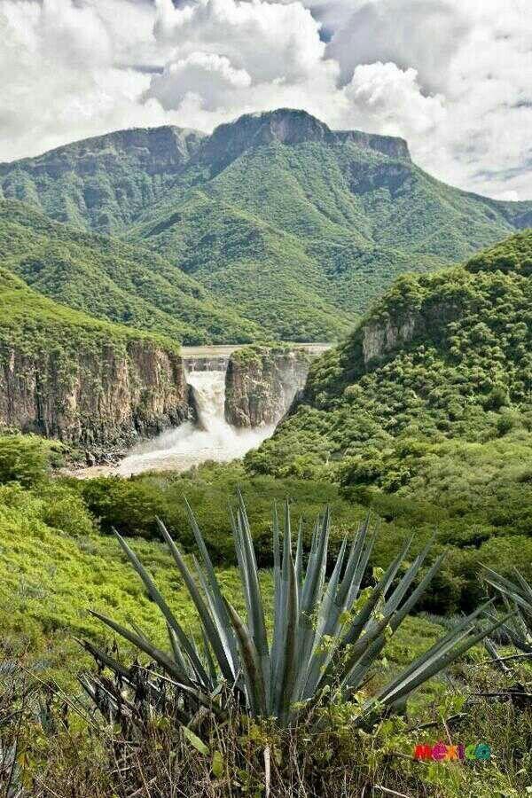 Un #agave creciendo a la vera de un río. Paisajes de #Jalisco, estado maravilloso de paisajes increíbles, donde se produce el mejor #tequila del mundo.