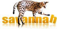 Savannah Cat Price