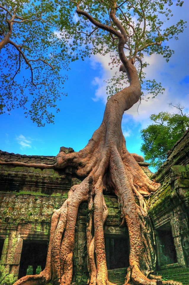 Angkor, Cambodia |   Angkor is a huge complex of the 12th century temples in Cambodia. No doubt that its a place of historical and cultural interest. The buildings are ancient and magnificent.