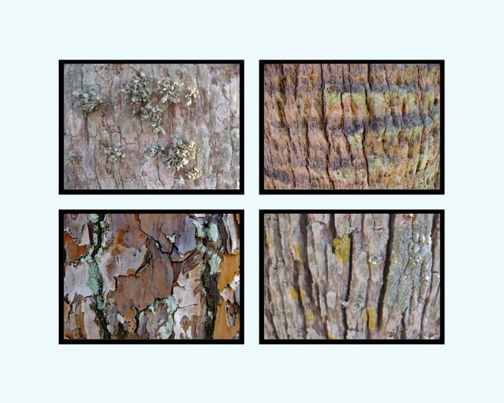 Wall Grouping of Four interesting Soft Bark Art Photographs. 8 1/2 x 11 inches Size . Easy to Frame. Lovely Rustic Wall Decor. DIY. by VintageArtForLiving on Etsy https://www.etsy.com/listing/519360591/wall-grouping-of-four-interesting-soft