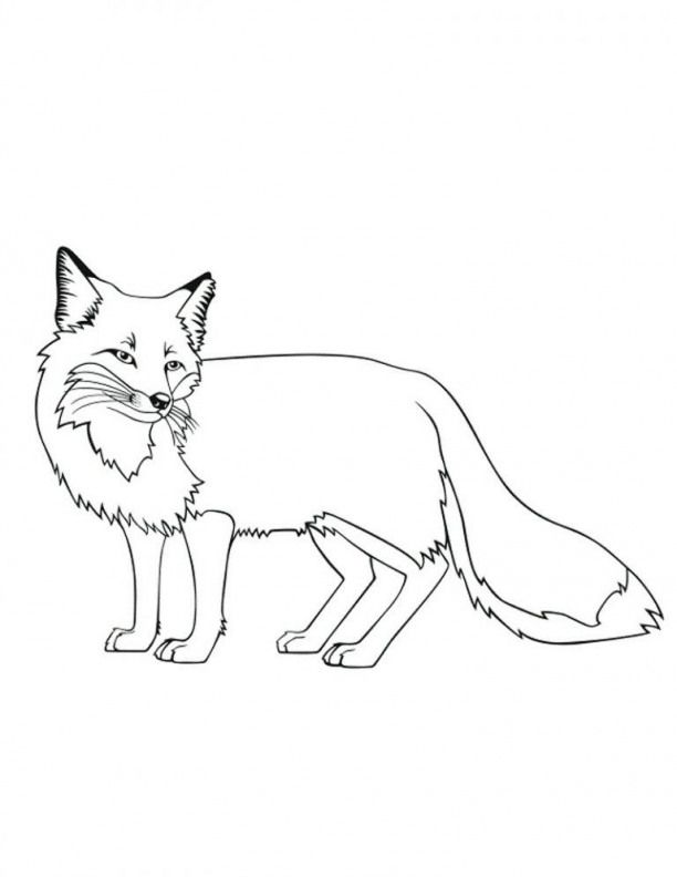 Fox Coloring Pages Printable Kidswoodcrafts Dibujos Dibujos De