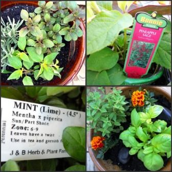 Help your kiddos plant a sensory garden with delights for the nose, fingers and tastebuds