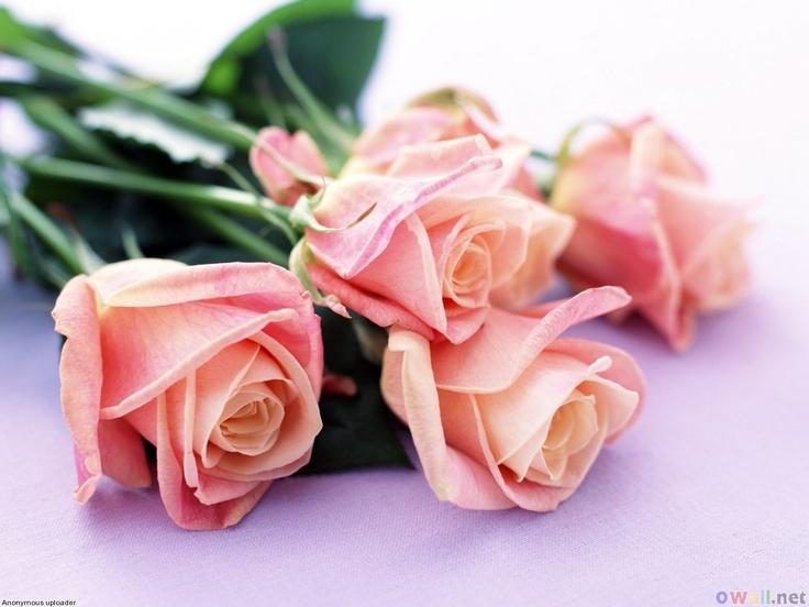 The 25+ best Rose hd photo ideas on Pinterest   Pretty flowers ...