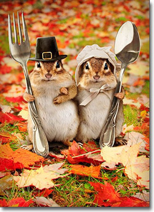 Details About Chipmunk Couple Funny Thanksgiving Card