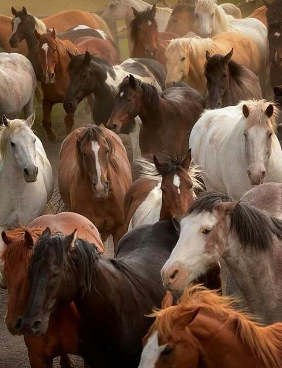 19Wild Horses Mustangs Before Autos oder Lastwagen   – Tiere Casssandra tiere