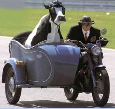 smile cow sidecar