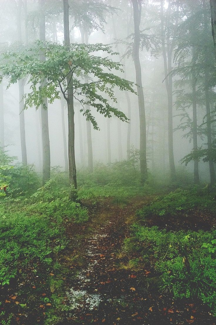 Amazing misty forest    #autumn #forest #misty #nature