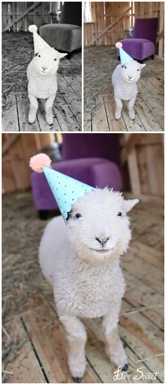 While I was playing I thought why not a lamb in a party hat… So then this happened!