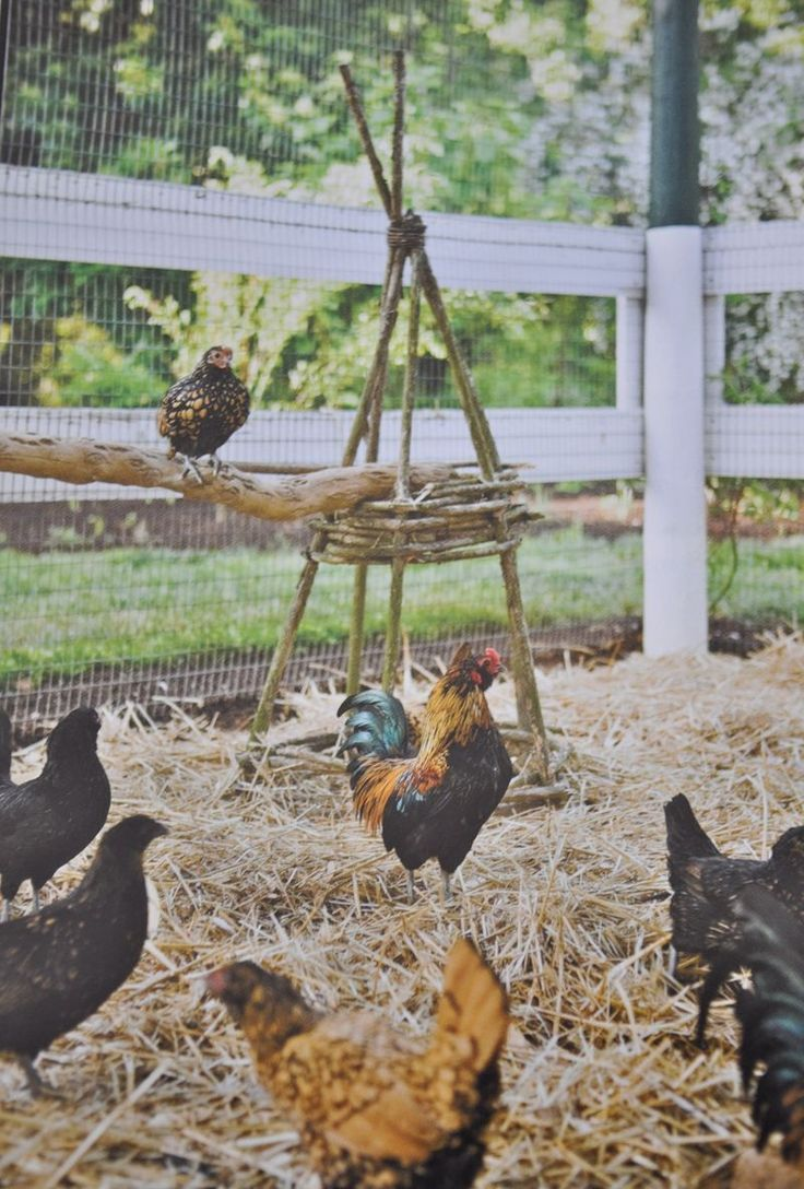 Using bent wood pyramids to help support perches for the chickens is such a great detail. Look at those happy chickens!