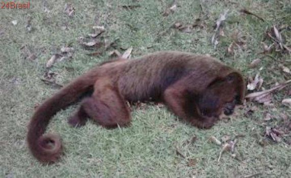 Macacos são encontrados mortos na Ufes e causa da morte será investigada