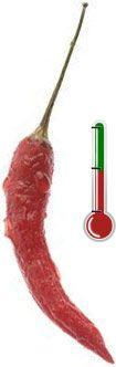 Pimentas Art | 60 Sementes de Pimenta Malagueta *Frete Grátis*