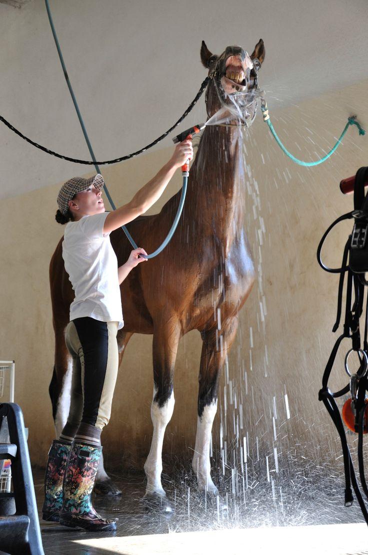 Bath Inside Wash Stall Horse Woman 1400 (