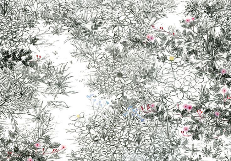 須藤由希子 Underbush in Chiang Mai チェンマイの下草 2009 Pencil and colored pencil on paper 25.1 x 36.4 cm