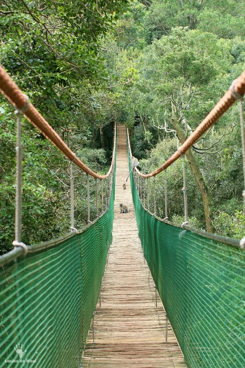 Suspension bridge Monkeyland