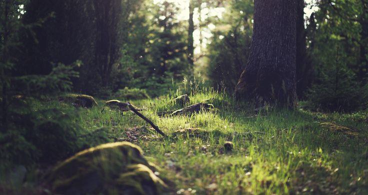Die Herz-Routinen sind ein Element aus dem Coyote Mentoring - welches Teil des Naturmentoring ist. Sie helfen uns dabei in tiefer Naturverbindung zu gehen.
