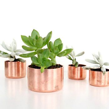 Succulents, perfect in a Mini Pan