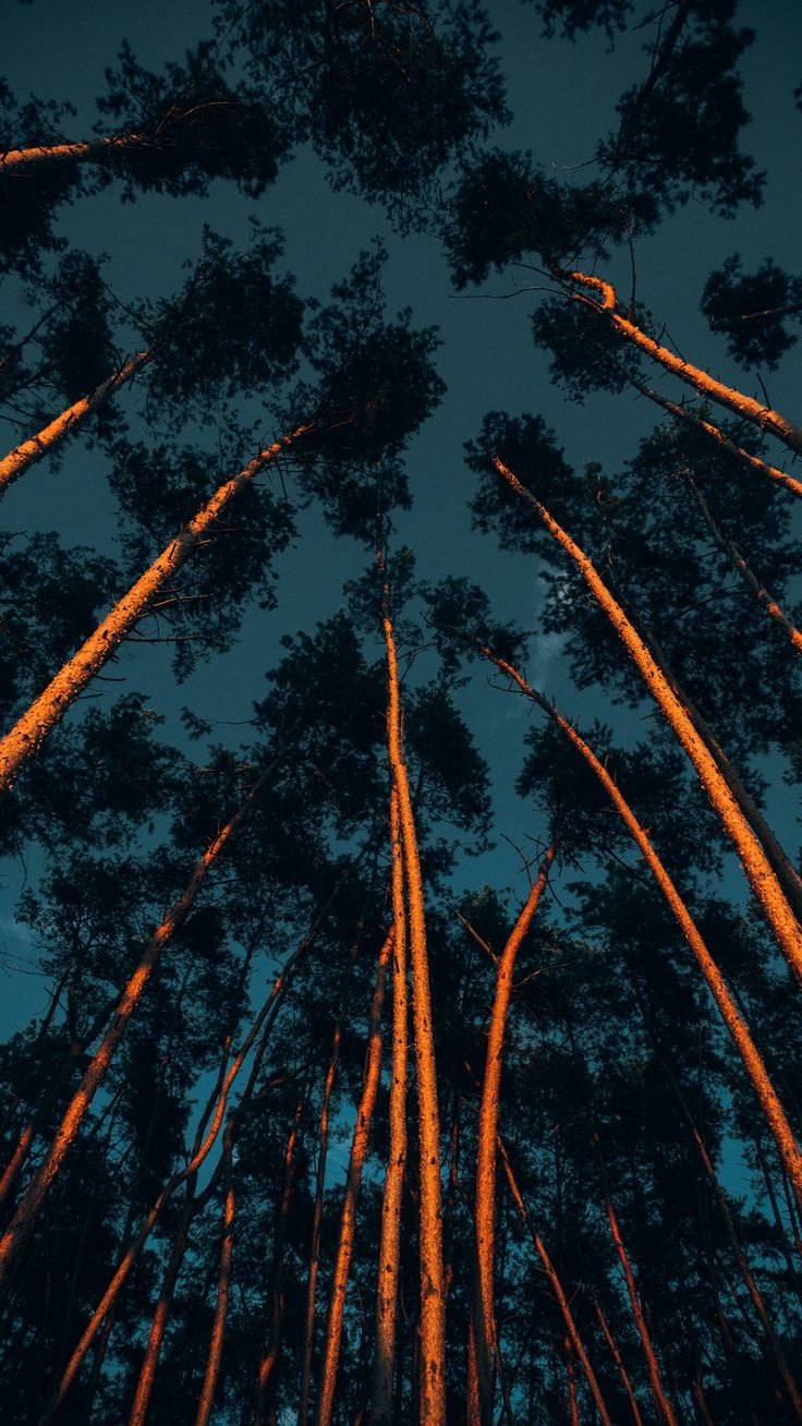 Download Iphone Xs Iphone Xs Max Iphone Xr Hd Wallpapers Trees Trunks Crowns Treetops Forest Dark Paisagem Hd Paisagem Desenho Fotografia De Paisagem