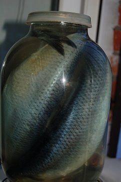 Засолка рыбы. Готовим вкусно, просто, быстро. Наша семья уже давно не покупает соленую скумбрию в магазине, домашняя засолка намного вкуснее, да и безопаснее. Потрясающая рыбка получается! Хочется еще, и еще... Рекомендую! Ингредиенты: 1 кг скумбрии или селедки 0,5 литра воды 2 столовые ложки соли 1 столовая ложка сахара Лавровый лист и черный перец горошком Рецепт приготовления: Налить воду в кастрюлю и поставить на огонь. Добавить соль и сахар, довести до кипения. Добавить лавровый лист и…