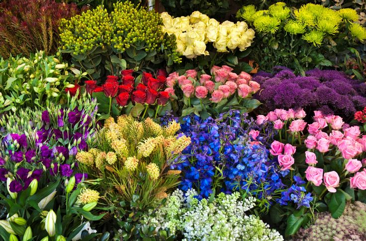 FAQ: What are Birth Month Flowers? | Field of Flowers