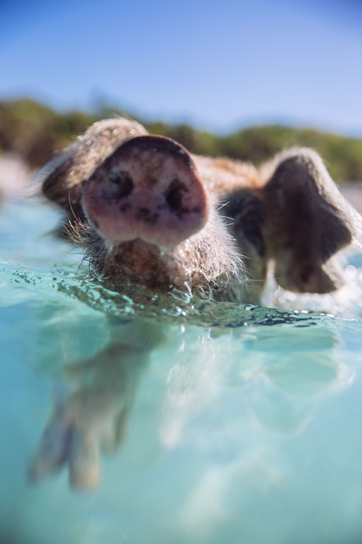Bahamas Dog Friendly Resorts