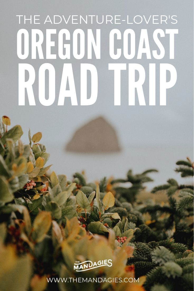 The Excellent Oregon Coast Highway Journey Itinerary (And Precisely The place To Discover All The Greatest Spots)
