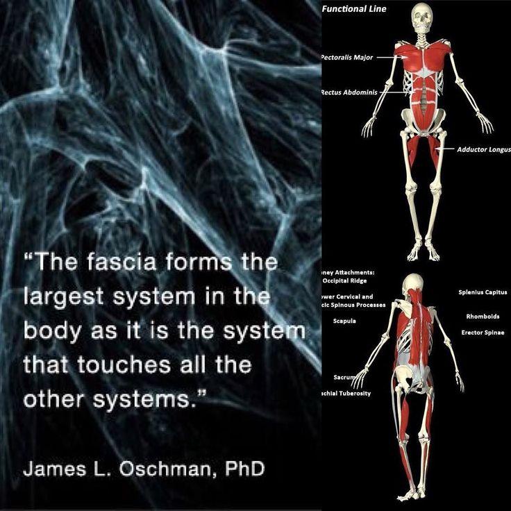 #姿勢 と #筋膜 と #痛み の関係 Relationship between #posture #myofasial #meridain and  #pain  腰痛で整形外科に行かれる場合85%は異常がないと診断され多くは椎間関節症候群とかヘルニア(第一段階)とかと診断されます  筋肉には機能があり多くは屈筋群伸筋群とあってシーソーのように引っ張り合いをっしてますよく言う背骨は背骨だけと思われがちですが本当は脊柱とって実際は脛骨という環椎から尻尾の骨まで繋がり人間は2425の脊椎があります  筋肉にも抗重力筋という姿勢維持筋というのがあり骨は筋肉そして筋膜という強い膜で頭から尻尾までつながるので首を曲げたりそらすだけでも自然と首だけでなく胸の筋肉や腰とかまで伸ばされます  これが崩れると筋肉の張りコリ(硬結)収縮短縮拘縮石灰化とかになってきますこの張りとか拘縮というのは痛みの発痛物資という悪さをしだすので腰痛や肩こりや頭痛などになる一つの要因になります…