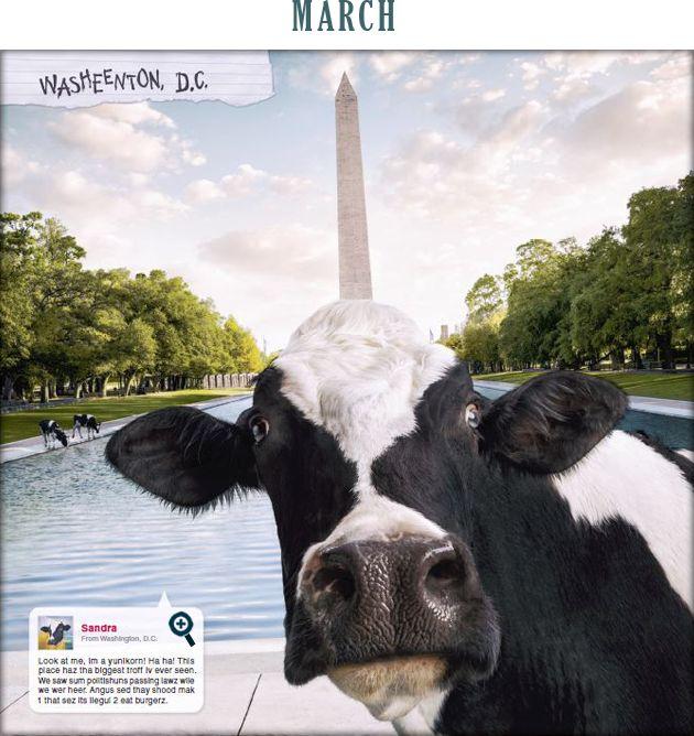 32 Best Cow Calendars Images On Pinterest 2015 Calendar