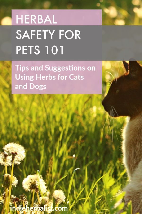 Herbs for cat health