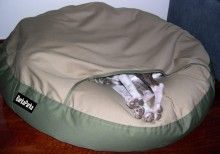 Whippet inside the pouch of the Snug pet bed