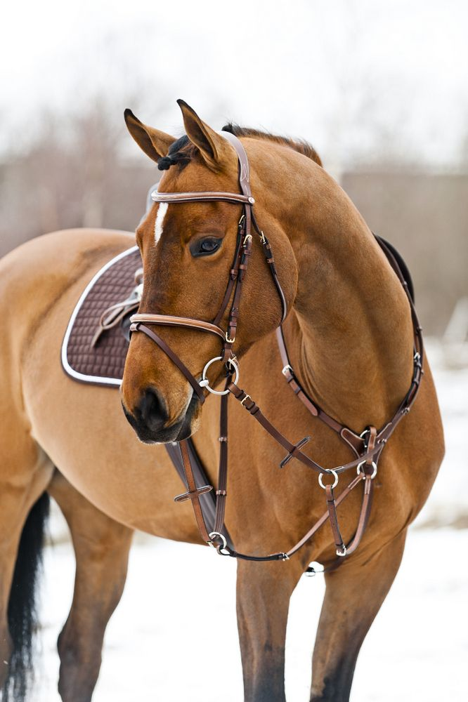 Do you remember when you hooked me up with the bareback saddle and the hackamore? Can't remember why...for a parade, maybe?