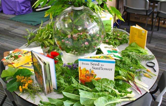 Sensory Garden/botany provocation ≈≈ Early Life Foundations ≈≈ http://pinterest.com/kinderooacademy/provocations-inspiring-classrooms/