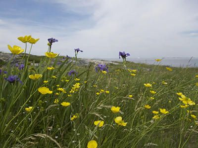 Summer does visit Newfoundland, and it brings a bounty of beautiful wildflowers