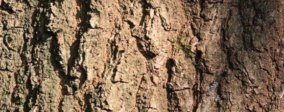 de-keltische-boomhoroscoop-welke-boom-past-bij-jou