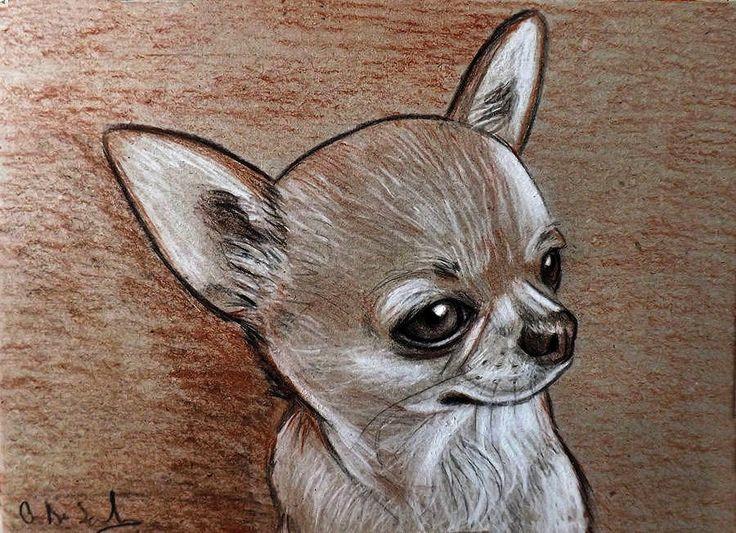 Картинки чихуахуа для срисовки портрет легкий